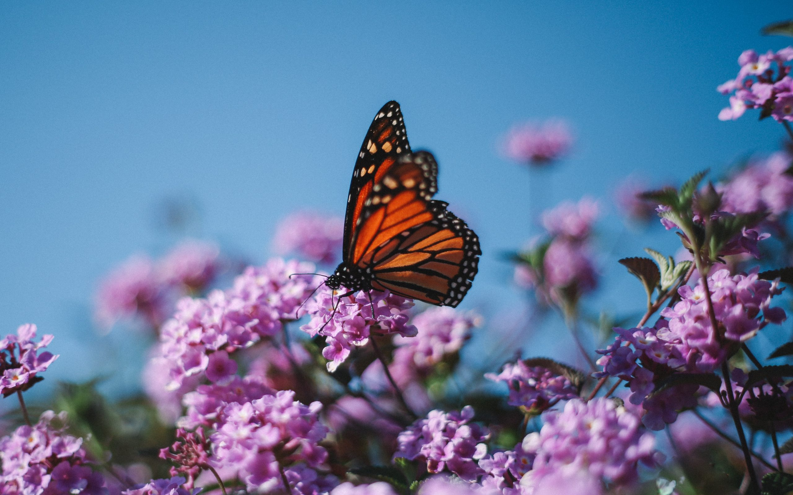 A red butterfly on purple flowers.